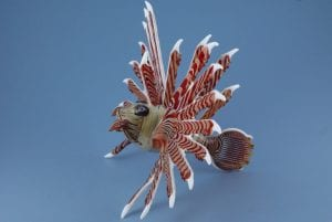 medium-lionfish-side