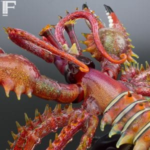 lindemann_gray_lobster_wm_2048_2