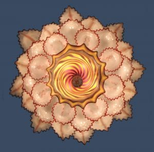 lotus-underneath